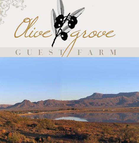 Olive Grove Guest Farm - logo