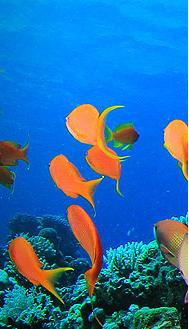Sea Escapes - fish