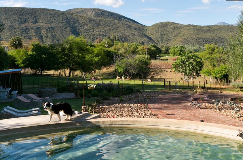 Die Fonteine - pool