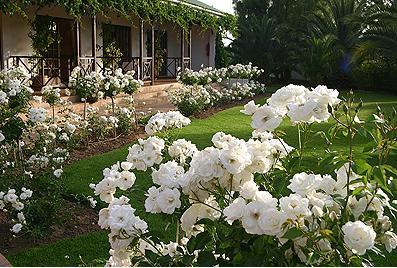 Hlangana Lodge - roses