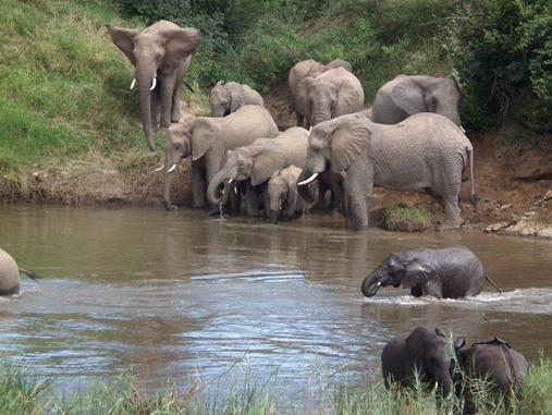Rio Vista Lodge - elephants
