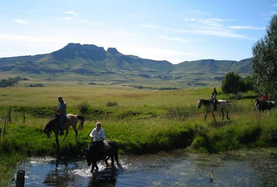 Moolmanshoek Private Game - horses