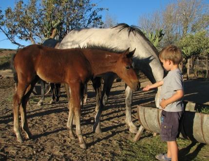 Blesfontein Guest Farm - feeding the horses