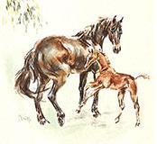 Natte Valleij - horses