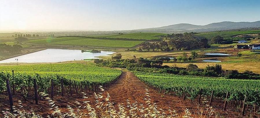 Burghespost Wine Farm - view