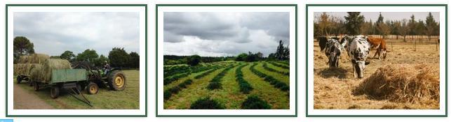 Rosemary Hill - farm