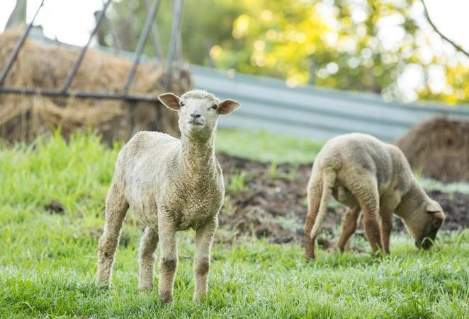 Glengarry - farm