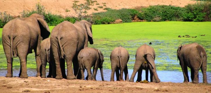 Long Hope Villa - elephants