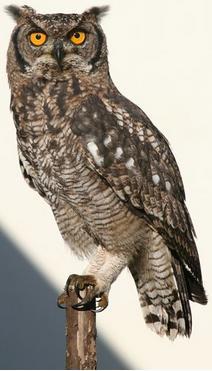 Lemonwood Cottages - owl