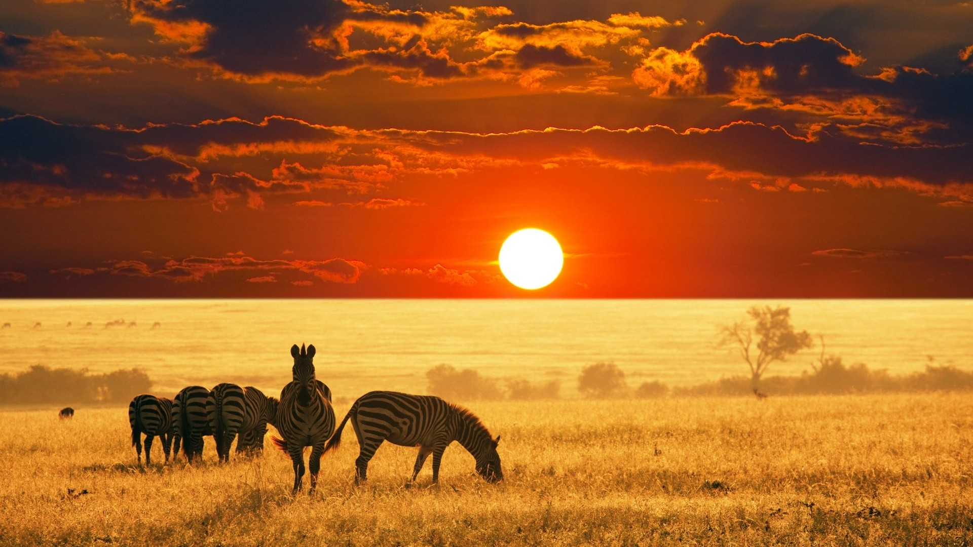 African-safari-animals-wallpaper-HD.jpg