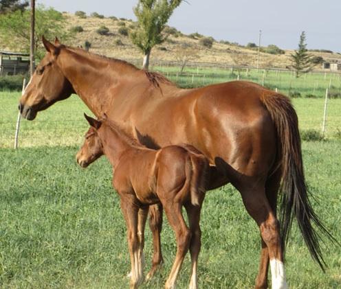 Morning Glory Farm - horses