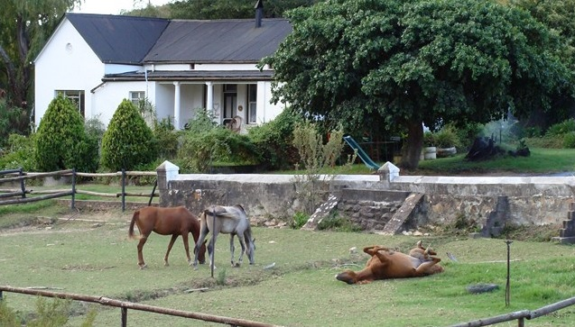 Paradise Cottage and Stables - main